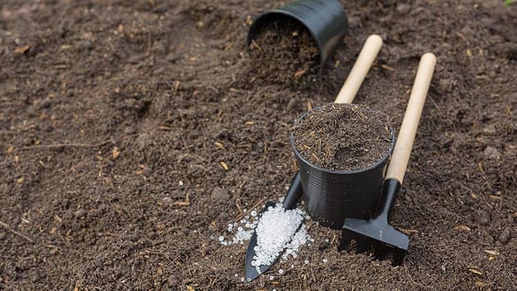 persiapkan tanah yang baik