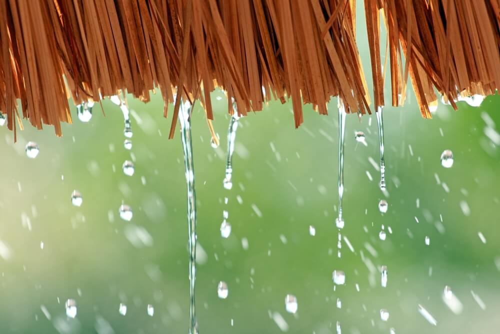 musim hujan saatnya memulai Cara Membuat Kebun Sayur Sederhana