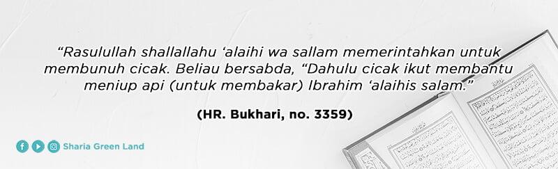 (HR. Bukhari, no. 3359) Cara Mengusir Cicak