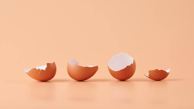 cangkang telur sebagai Cara Mengusir Cicak