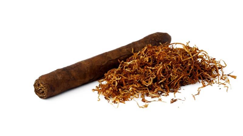 tembakau sebagai Cara Mengusir Cicak